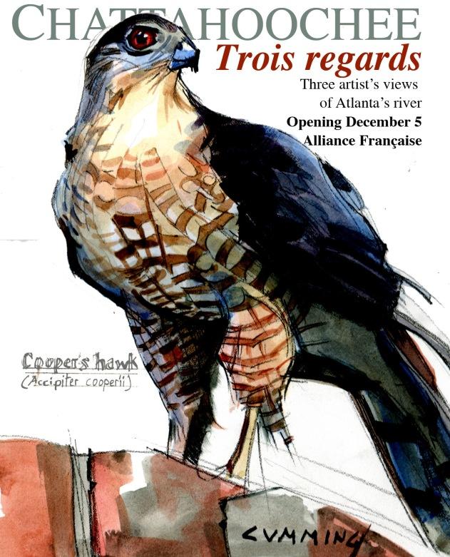 Coopers hawk poster